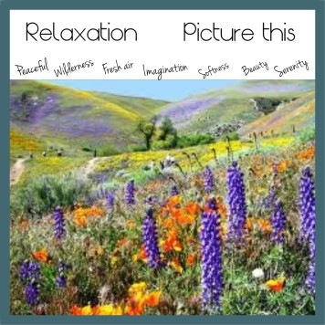 A scented garden to take your mind on a soothing aromatic journey.