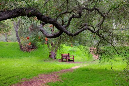 Go on take a seat, sit back let yourself relax and close your eyes, and absorb the nature around you What can you hear? What can you smell?