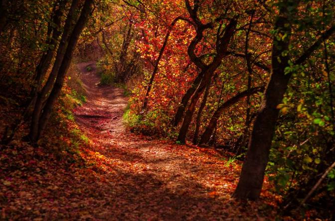 A thoughtful walk or a fantastical adventure with fairies and pixies, or knights on white horses!? wherever your mind takes you.